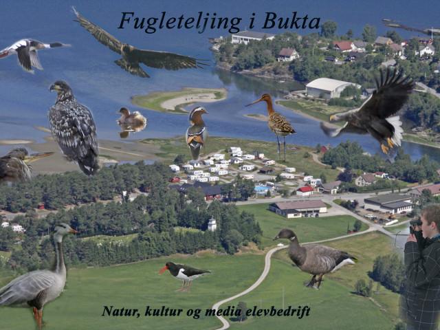 Teljing av fugl i Bukta fuglefredingsområde
